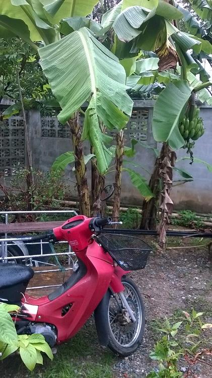 мопед под бананом таиланд
