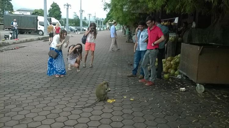 обезьяна ест банан бату