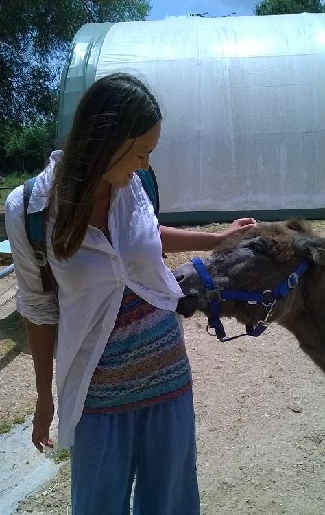 приют для осликов корфу