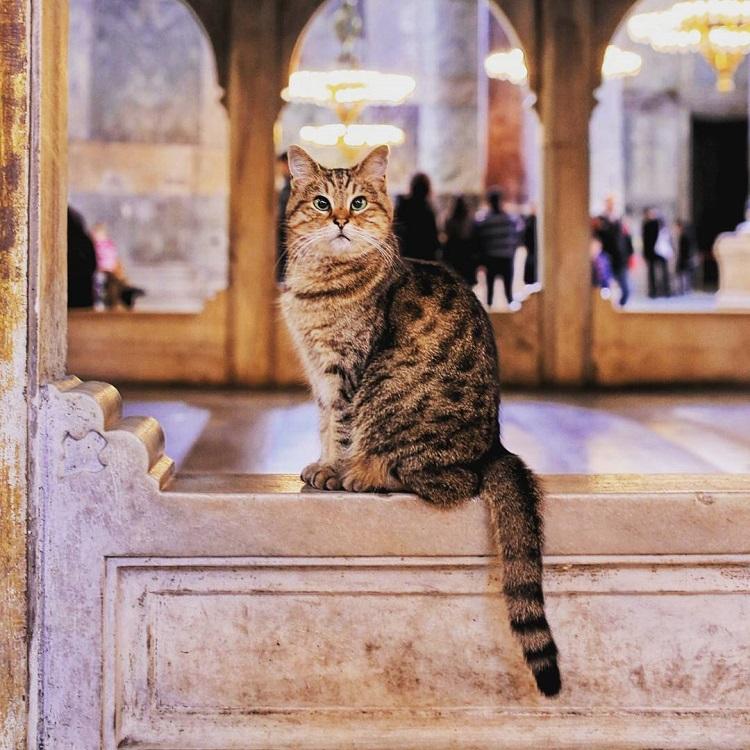 айя софия кот