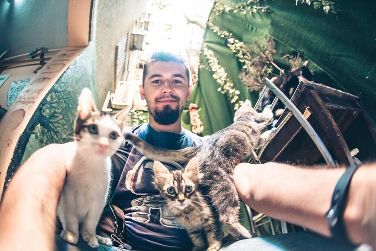коты стамбул